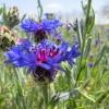 عکس های بهاری از طبیعت چهارطاق